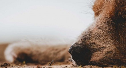 Idosa morre intoxicada após envenenar nove cães