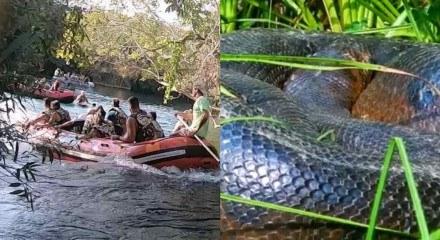 o animal de cerca de 6 metros estava na margem do Rio Formoso quando o bote passou.