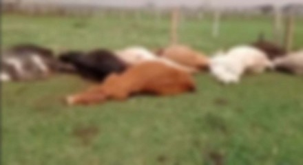 Animais morreram eletrocutados
